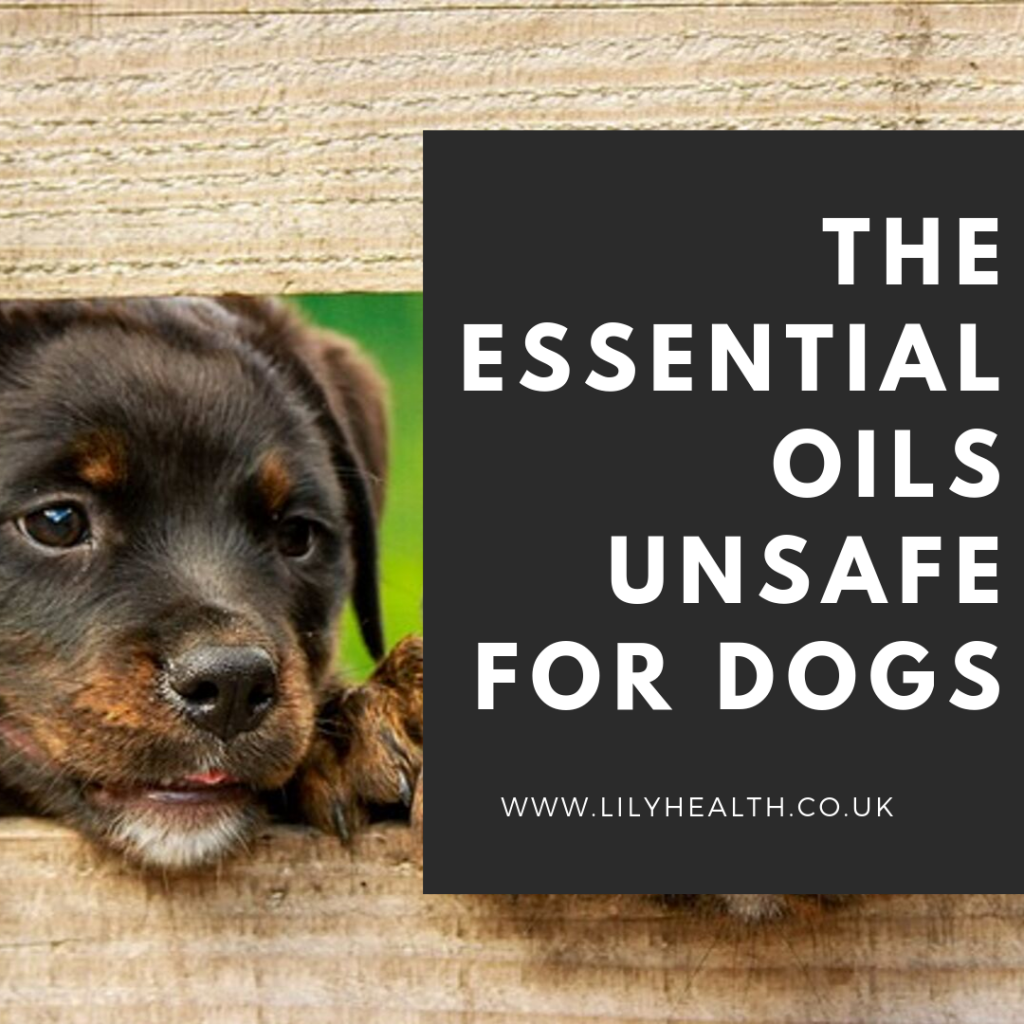 The Essential Oils Unsafe for Dogs